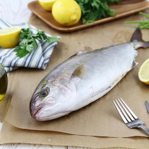Ricciola pescata Italia